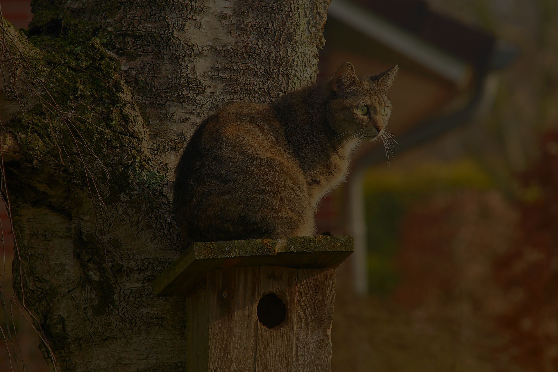 a cat sitting on the bird house on the tree.