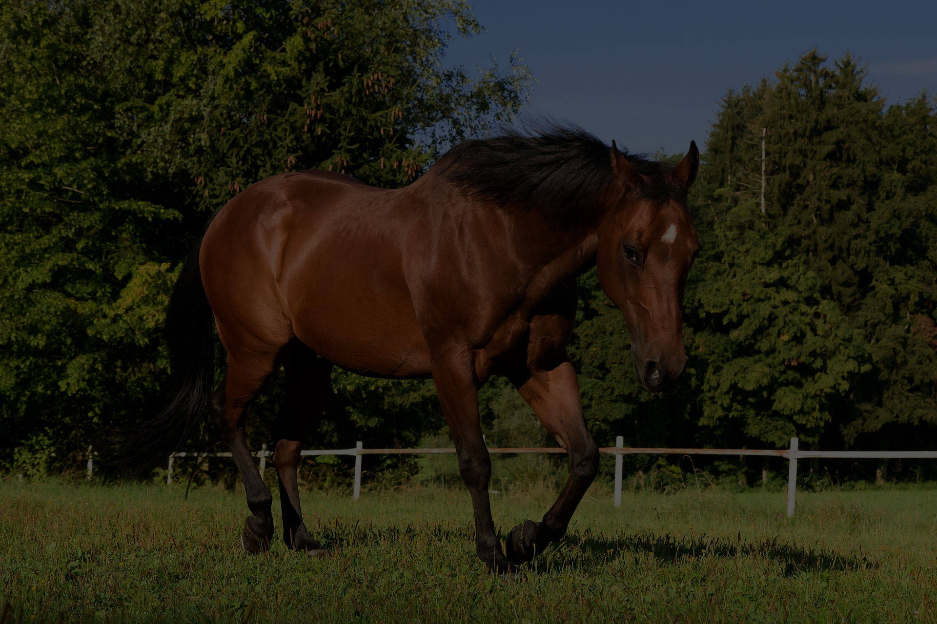 horse-quarterhorse-brown-pasture