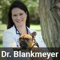 Dr_Blankmeyer_Bio